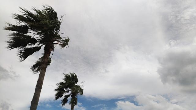台風直撃で飛行機が欠航!飛ぶの?飛ばないの?そんなときの準備