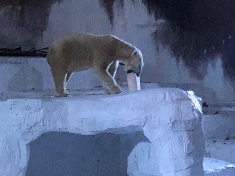 ホッキョクグマ(シロクマ)がいる動物園でおすすめは?【関西編】