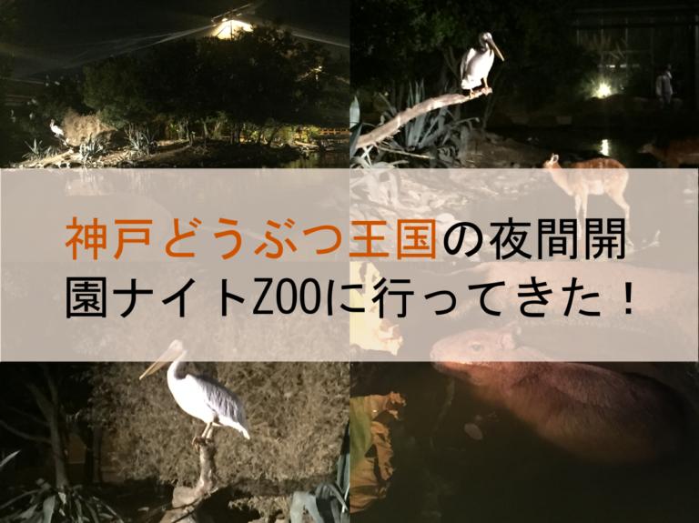神戸どうぶつ王国の夜間開園ナイトZOOに行ってきた!混雑回避は20時以降がおすすめ!